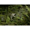 Kép 3/4 - Invadergear -  Revenger TDU Shirt (CAD)
