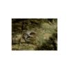 Kép 3/4 - Invadergear -  Revenger TDU Shirt (Socom)